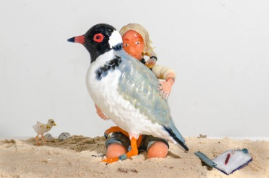 Hooded Plover and Human
